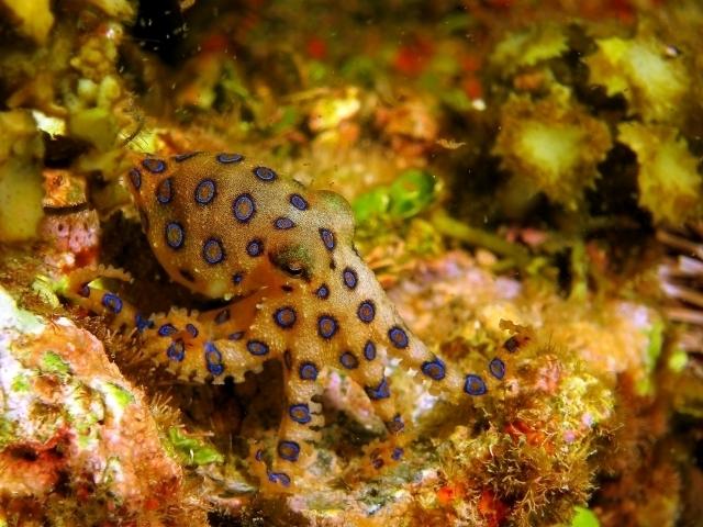 海 透明 小さい 虫